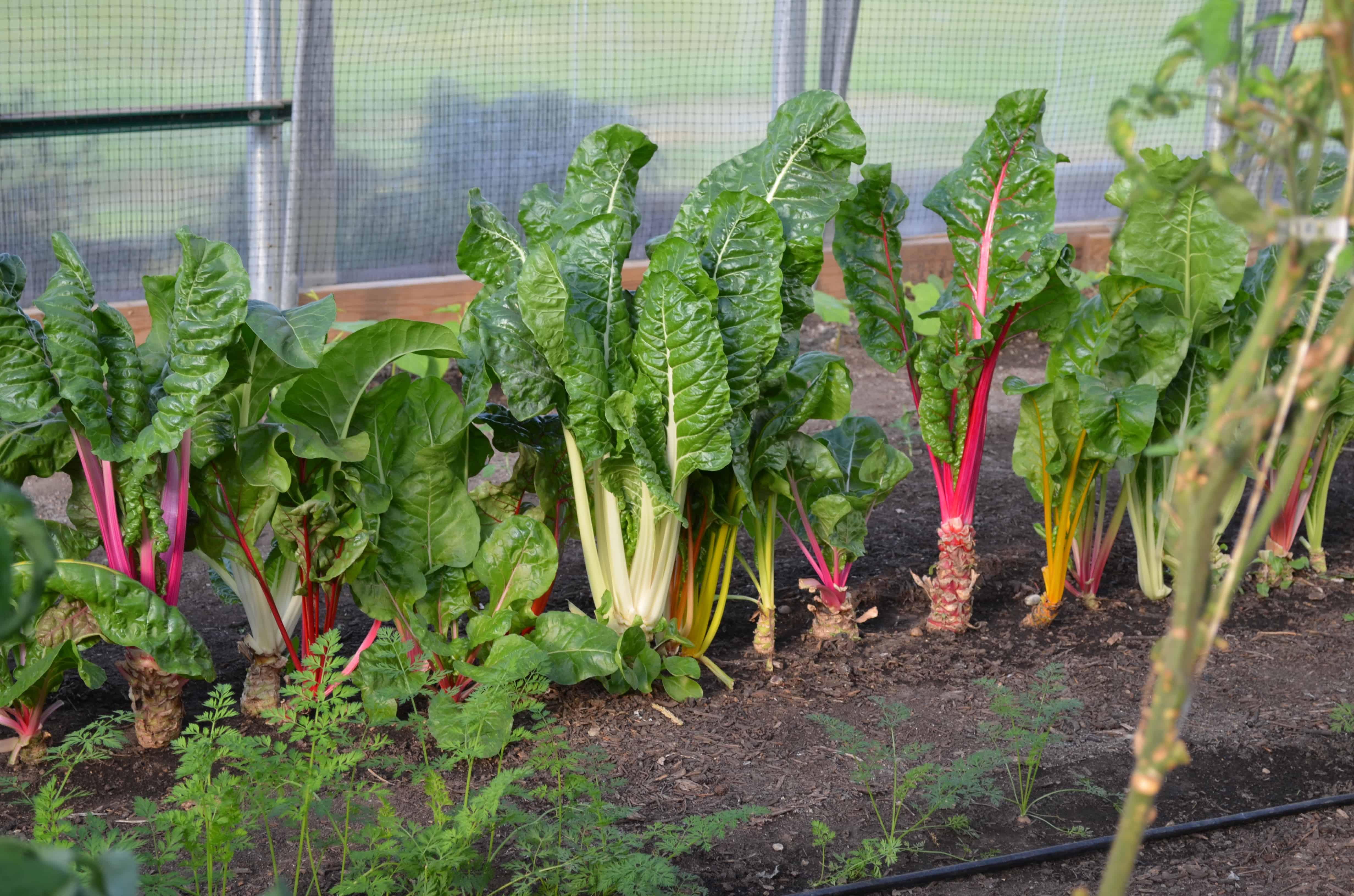 My Trip To The Hydroponics Garden At Farmtek Surviving A