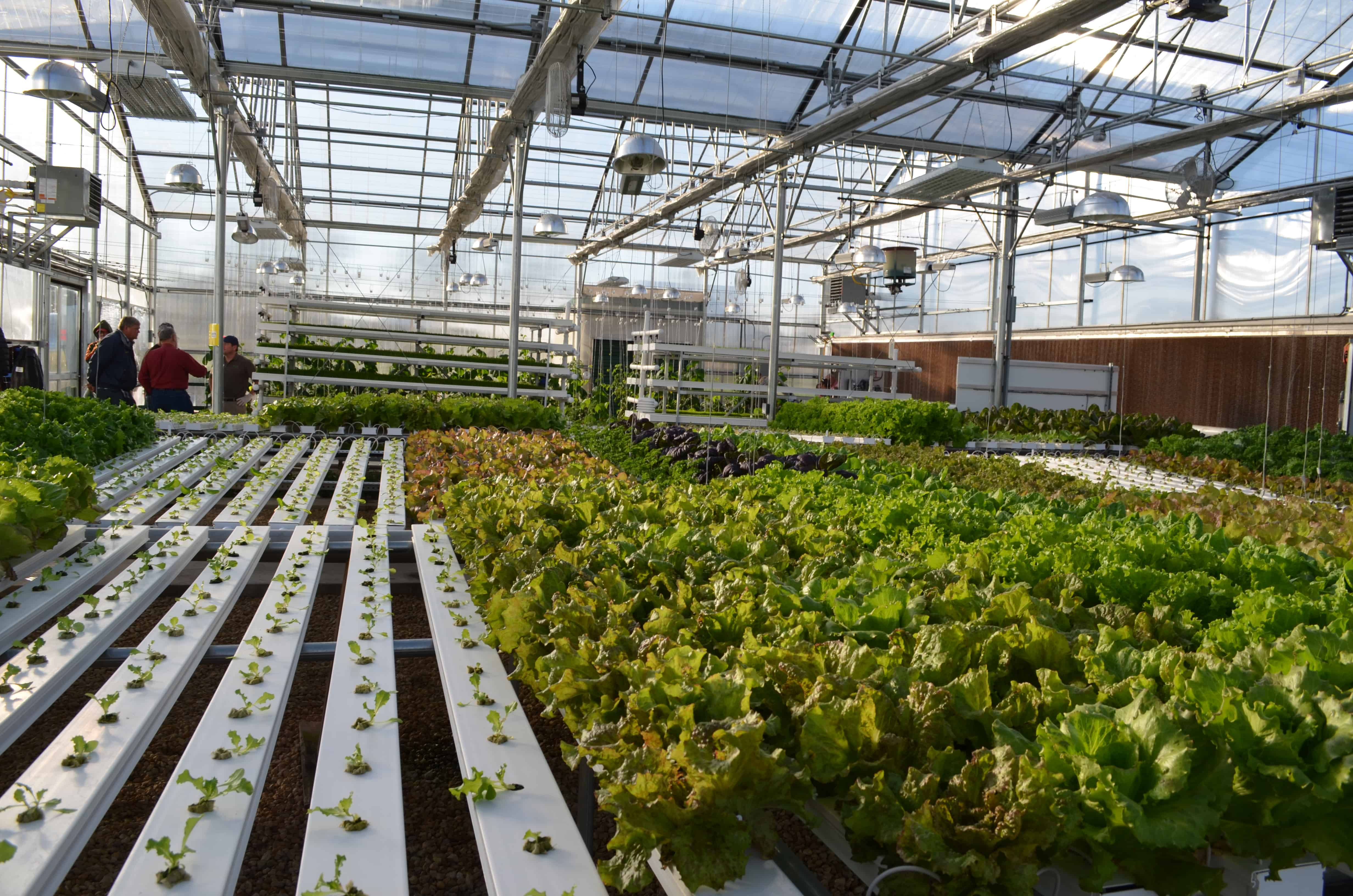 My Trip to the Hydroponics Garden at Farmtek Surviving A