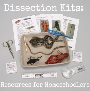 Affordable Dissection Kits for Homeschool Families