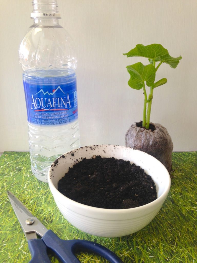 Upcycled Water Bottle Garden Seedling Starter