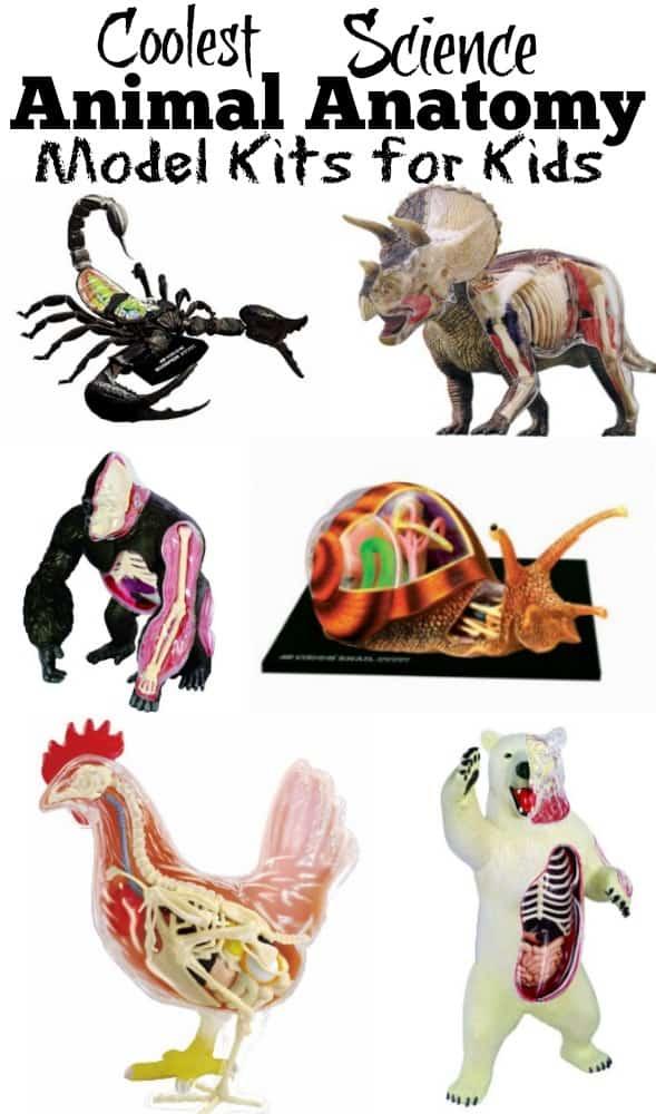 Animal anatomy models