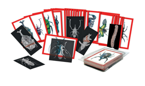 Insect X-Ray Picture Cards