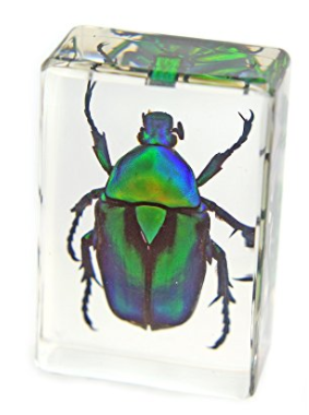 Green Chafer Beetle paperweight block gift